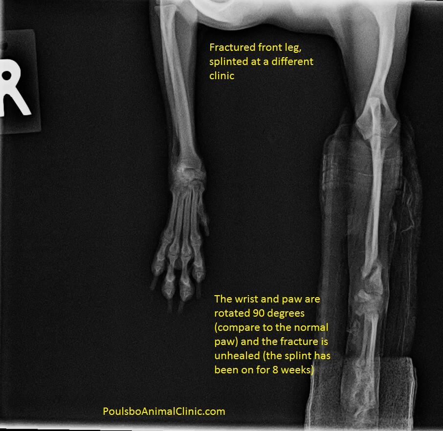 dog leg fracture repair